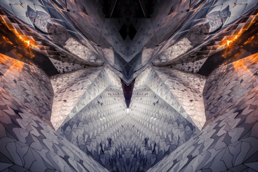 Predator, photographie, galerie
